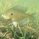 ¿Es sostenible la actividad pesquera en el Lago Titicaca?: una reflexión por el día Mundial de los Humedales (02 de Febrero)
